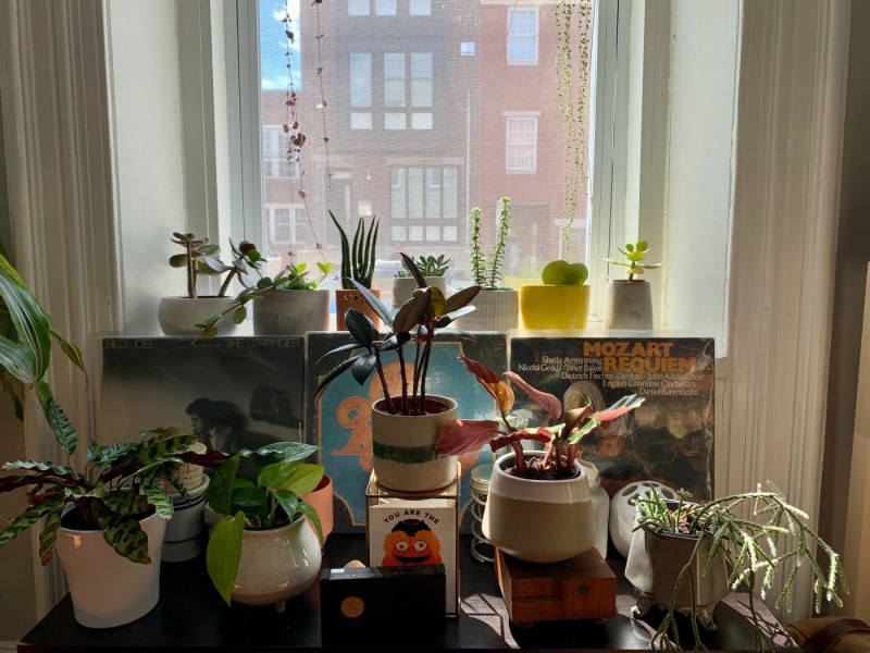 Julie's plants